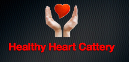 healthy heart cattery